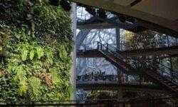 Фото: Стеклянные сферы с крытыми садами в штаб-квартире Amazon