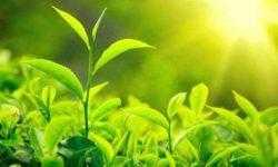 Сможет ли искусственный фотосинтез стать альтернативой солнечным панелям?