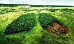Голландские ученые разработали ДНК-тест для выявления незаконно вырубленных деревьев