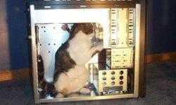 [Из песочницы] Установка Debian с корнем на шифрованном ZFS зеркале