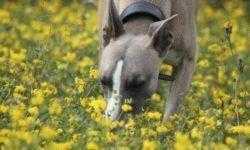 Похоже, собаки могут «видеть» своими мощными носами