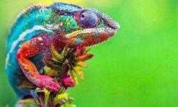Российские ученые создали искусственную кожу хамелеона
