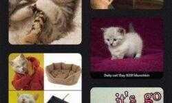 Тренируемся на кошках: модификация коллекций и таблиц в iOS