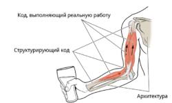 Анатомическая метафора кода. Где у кода мускулы