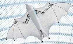 Немецкие инженеры создали летающую роболисицу