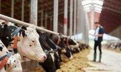 Создатель системы мониторинга состояния коров привлёк €2,5 млн от Sistema VC и других инвесторов