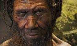 Живые «мини-мозги» неандертальцев расскажут, что делает наш мозг особенным