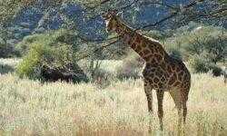 От гудения жирафов до звуков птиц-подражателей — слушаем природу вместе