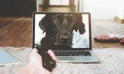 Хакеры атакуют гаджеты для домашних животных