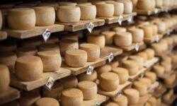 «Если сыр вкусный — о вас узнают везде»