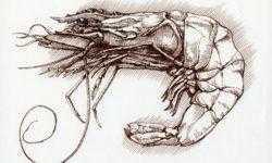 Делаем Shrimp еще полезнее: добавляем перекодирование картинок в другие форматы