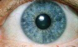 Google создали ИИ для диагностики глазных болезней