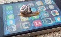 Apple и Samsung впервые оштрафовали за замедление старых телефонов