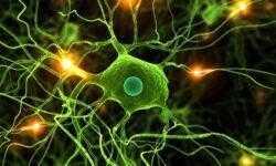 Новое исследование показывает, что нервные клетки все-таки восстанавливаются