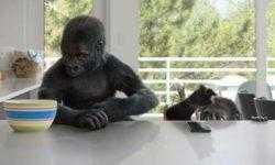 Разработчик стекла Gorilla Glass увеличил квартальную прибыль в полтора раза