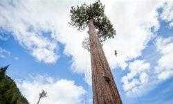 Хитрое префиксное дерево Си реализация