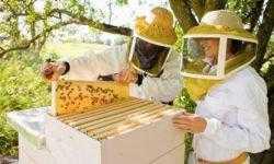 Пчеловоды против микроконтроллеров или о пользе ошибок