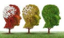 [Перевод] Клинические испытания показали уменьшение прогрессии болезни Альцгеймера более чем наполовину