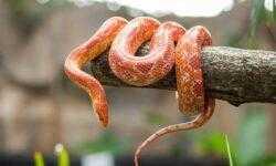 [recovery mode] Изучаю Rust: Как я игру «Змейка» сделал
