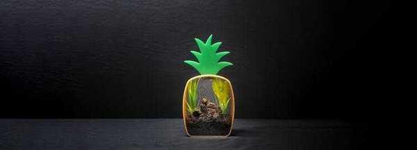 Улитка The Boring Company по имени Гари VI, в своём обиталище в форме ананаса