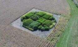 Исправление «глюка» фотосинтеза привело к повышению урожайности на 40%