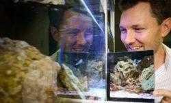 Эксперимент: узнают ли рыбы себя в зеркале?