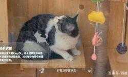 Интернет-компания Baidu построила приют с поддержкой ИИ для бездомных кошек