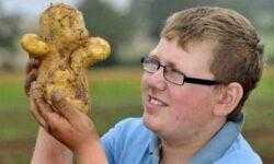Заметки фитохимика. Картофель. Часть вторая. Рассказы про белки/жиры или «День сыроеда»