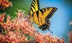 Земля может полностью лишиться насекомых в течение ближайших ста лет