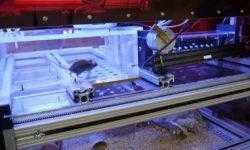 Лабораторные мыши смогут проходить испытания когда захотят