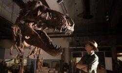 Палеонтологи обнаружили самого крупного и взрослого тираннозавра в истории