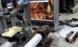 Паучий шелк предложили использовать в качестве мышц роботов