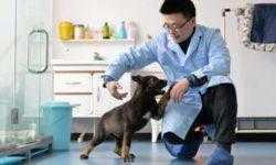 В Китае клонировали полицейскую овчарку, чтобы ускорить дрессировку щенка