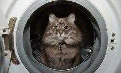 В России приступили к разработке космической стиральной машины