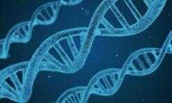 Первый созданный компьютером геном может стать основой для синтетической жизни