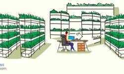 Samsung повышает эффективность светодиодов для выращивания растений