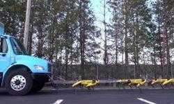#видео | Роботы SpotMini от Boston Dynamics тянут за собой огромный грузовик