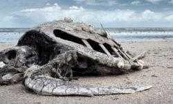 Биологи грозят «Шестым массовым вымиранием» растений и животных
