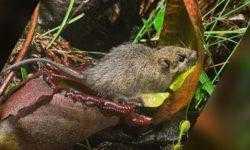 Доминируй, властвуй, унижай: грызуны используют хищные растения в качестве туалета