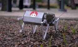 Небольшой четвероногий робот Doggo умеет делать сальто