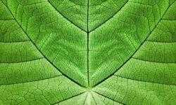 Поможет ли искусственный фотосинтез справиться с климатическим кризисом?