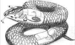 Разбираем змею