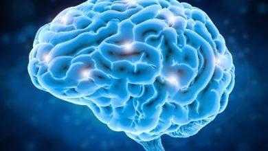 Фото Лекции о мозге, часть 1. Эволюция головного мозга человека. Функции мозга на каждом этапе его развития