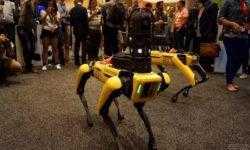 Механические собаки Boston Dynamics станут участниками боев на роботах