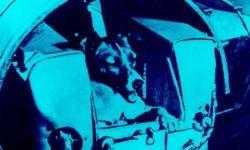 Собаки снова полетят в космос. Зачем?