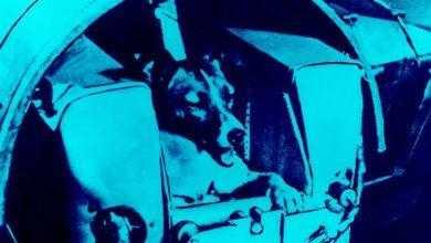 Фото Собаки снова полетят в космос. Зачем?