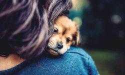 Заразный стресс: межвидовая синхронизация уровня кортизола на примере собак и их хозяев