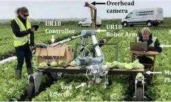 Агро-робот с ИИ научился аккуратно собирать с грядки только созревший салат