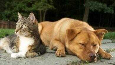 Фото Кто умнее — кошки или собаки?