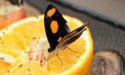 Почему съедобные насекомые полезнее, чем стакан апельсинового сока?